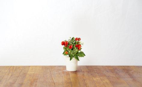 Mini Tomato 3-Pack plant pods for Smart Garden