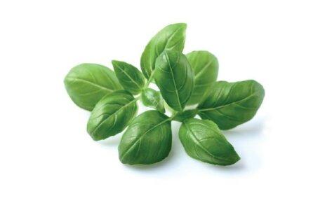 Basil 3-Pack plant pods for Smart Garden
