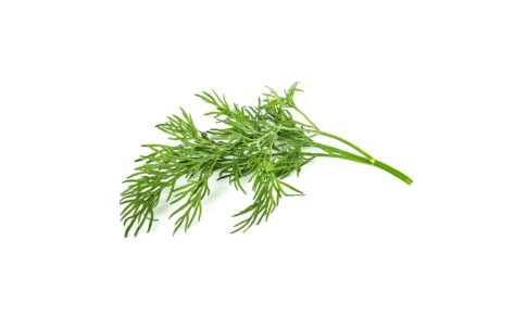 Dill 3-Pack plant pods for Smart Garden