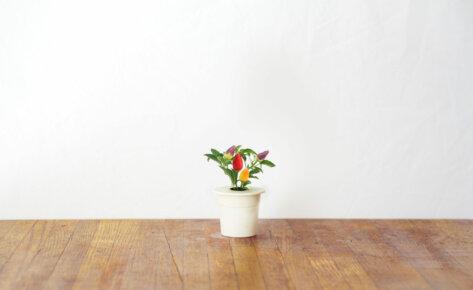 Chili Pepper 3-Pack plant pods for Smart Garden