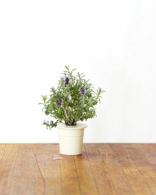 Refill-Lavender