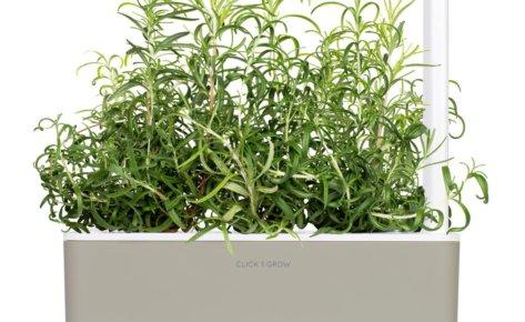 Rosemary 3-Pack plant pods for Smart Garden