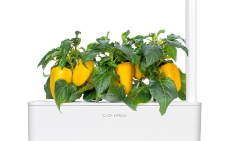 Yellow sweet pepper 3-Pack plant pods for Smart Garden