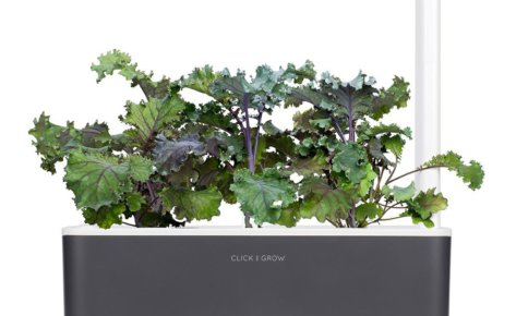 Red kale 3-Pack for Smart Garden