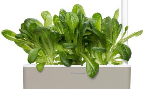 Romaine Lettuce 3-Pack plant pods for Smart Garden