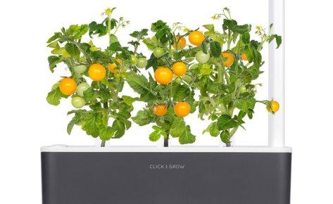Mini Tomate jaune 3-Pack recharge pour Smart Garden