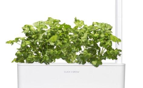 Cilantro/Coriander 3-Pack plant pods for Smart Garden