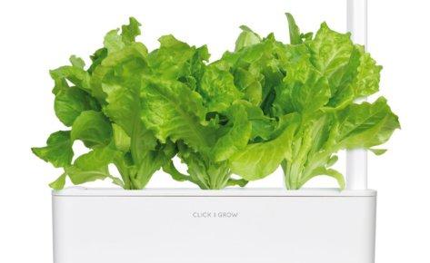 Green lettuce 3-Pack plant pods for Smart Garden
