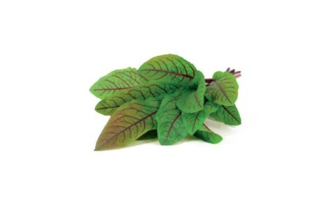 Bloody Sorrel 3-Pack plant pods for Smart Garden