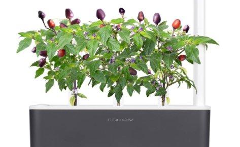 Purple Chili Pepper 3-Pack plant pods for Smart Garden