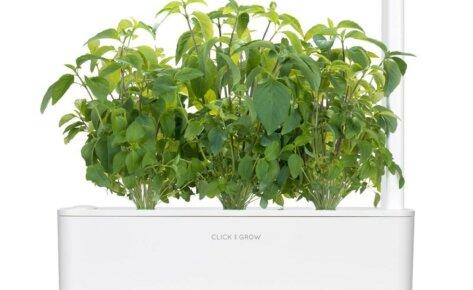 Thai basil 3-Packs plant pods for Smart Garden