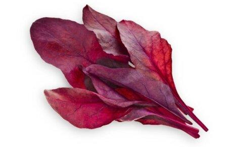 Red Leaf Beet 3-Pack plants pods for Smart Garden