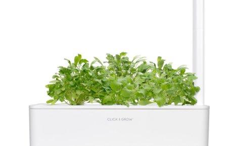 Garden Cress 3-Pack plants pods for Smart Garden