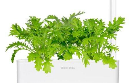 Leaf Mustard 3-Pack plants pods for Smart Garden