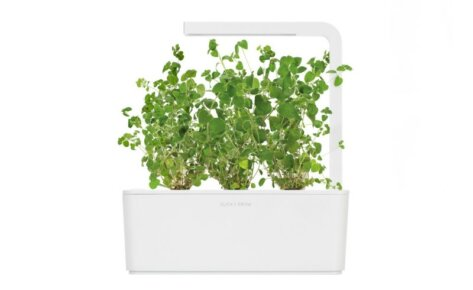 Marjoram 3-Pack plants pods for Smart Garden