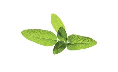 Garden Sage 3-Pack plants pods for Smart Garden